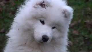 Podzimní úklid s Readym aneb, zírám co to ten velký pes má na hlavě