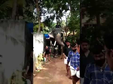 Xxx Mp4 Thrikkadavoor Sivaraju New Seson Started 2019 3gp Sex