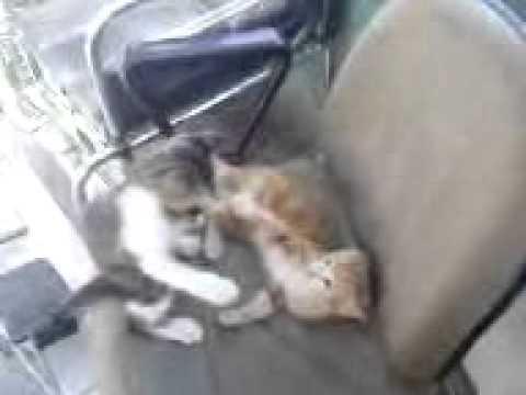 boksör kedi antalya turkiye.3gp