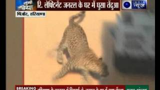 Caught on Camera: Leopard spotted at a house in Chandigarh