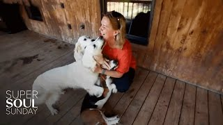 This Woman Is Changing the World, One Animal at a Time | SuperSoul Sunday | Oprah Winfrey Network