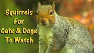 Videos for Dogs To Watch - Squirrels