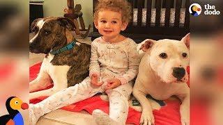 Girl Loves Taking Care Of Her Pit Bull Dog Best Friends | The Dodo