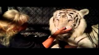 Florida woman keeps two Bengal tigers in her garden and treats them as ordinary pets