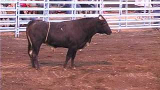 Bull Thing Cowboy Poker 2008