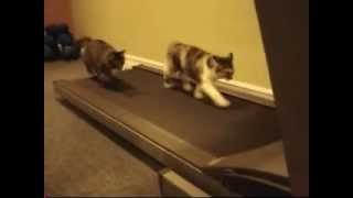 Cat Using Treadmill - Watch Cats Exercise