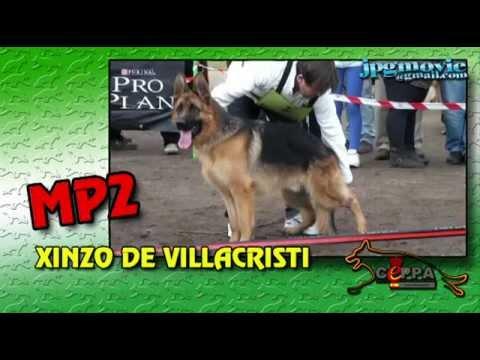 Xxx Mp4 MONOGRAFICA UTRERA 2013 Cachorros Machos De 9 A 12 Meses 3gp Sex