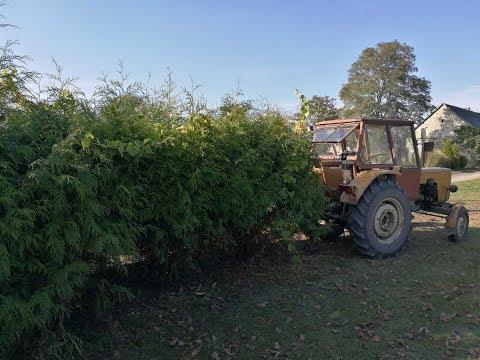URSUS C360 3P vs Thuje :P Wyrywanie krzewów