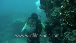 Indian diver finds Puffer fish in Indian Ocean