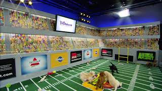 New Stadium   Puppy Bowl XIV