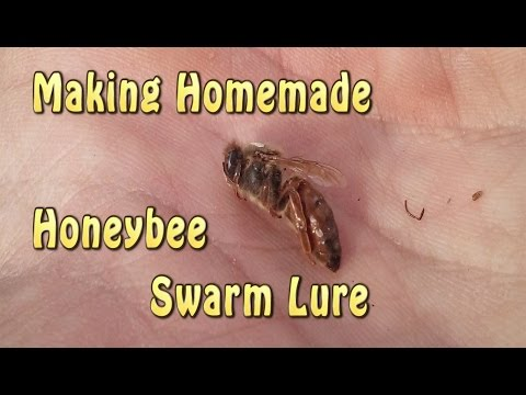 Xxx Mp4 Homemade Honeybee Swarm Lure 3gp Sex