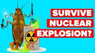 How Can A Cockroach Survive A Nuclear Explosion?
