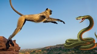 Monkey Snake & Mouse - Real Fight | Full Video From My Phone