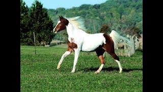 اغلى انواع الخيول فى العالم|The most expensive horses in the world