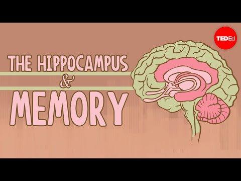 Xxx Mp4 What Happens When You Remove The Hippocampus Sam Kean 3gp Sex