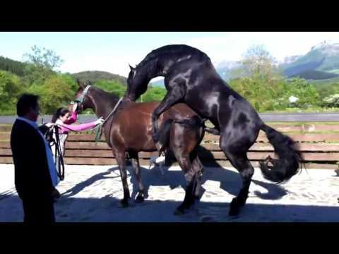 Xxx Mp4 Horse Mating – Life Of A Horses Part 2 3gp Sex