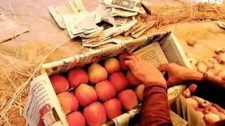 Timelapse of packing Delicious KASHMIRI APPLE Box