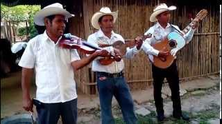 Mi cafetal - Trio Placer Huasteco