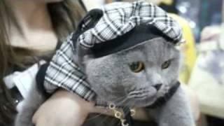 Выставка кошек.flv