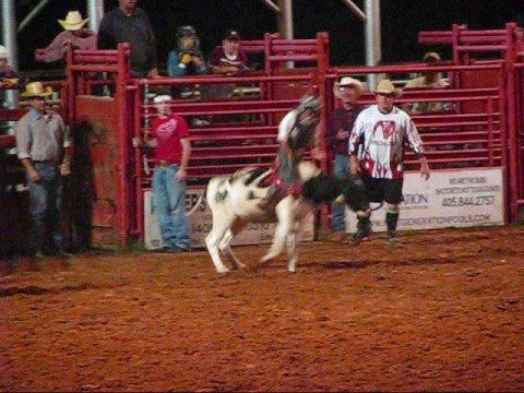 Jr. Rodeo calf steer and bullriding