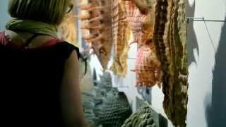 Cabinet of postdigital curiosities, [Ay]A Studio | Jorge Ayala installation, ArchiLab, FRAC Centre