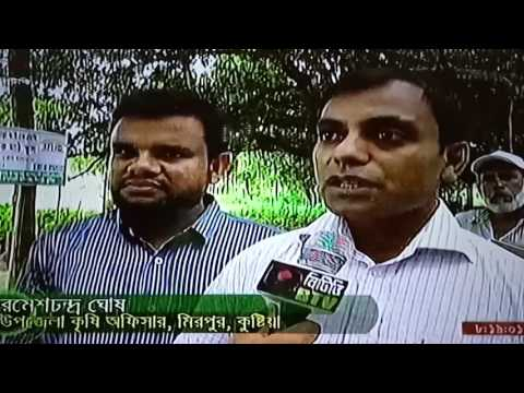 IFMC Farmer Field School in Mirpur Kushtia