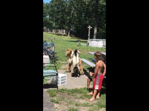 Xxx Mp4 My Goat Dry Humping A Toy Horse😹😹😹😹😹 3gp Sex