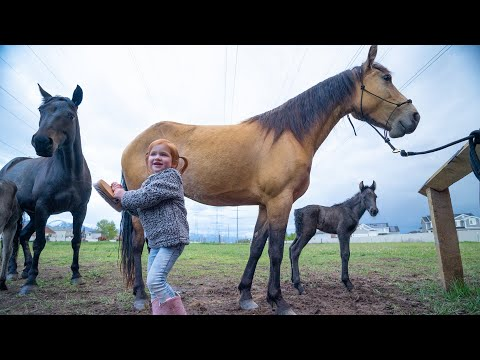 Xxx Mp4 NEW BABY HORSE Adley Visits Spirit To Help With Their Farm Routine 3gp Sex