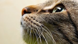 How to Train a Cat to Touch Your Hand | Cat Care