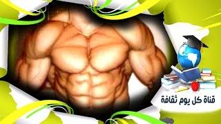 كمال الاجسام افضل 5 اطعمة سحرية وفعالة لبناء العضلات و بناء الاجسام - كمال اجسام