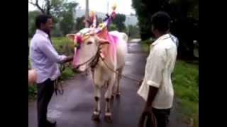 Bendoor Maldan Tal. Patan Ji. Satara