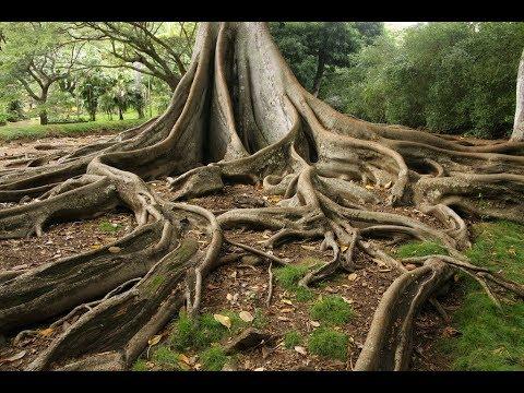Xxx Mp4 5 Most Strange Trees Of The World 3gp Sex
