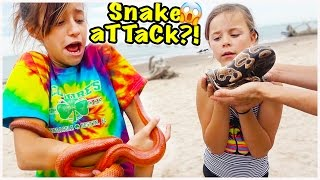 🐍 WE FIND SNAKES ON THE BEACH!! WILL THEY BITE?! 🐍 WE SURVIVE ON BANANAS!