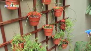 Kreasi Indah Tanaman Pot di Dinding