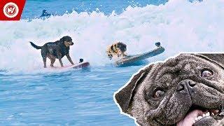 Scott Rogowsky Shows You Weird Sports   Dog Surfing