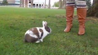 ButterCream19 Walking bunny @ the park (NO LEASH)