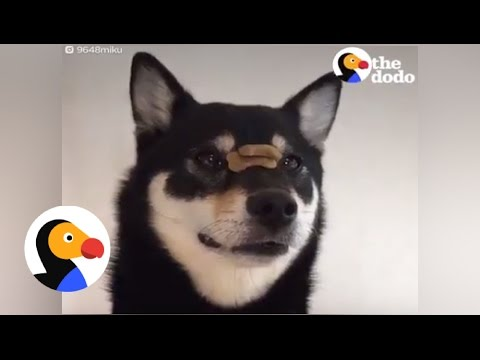 Dog is the Fastest Treat Catcher EVER The Dodo