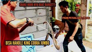 TYO SURVIVAL PUNYA KING COBRA GEDE..!!