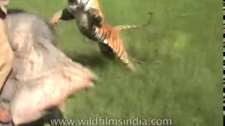 Animal Encounters in India