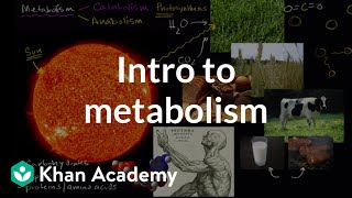 Introduction to metabolism: anabolism and catabolism | Khan Academy