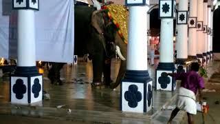 പന്ത്രണ്ട് ദിവസംകൊണ്ട് 106775 പേര് കണ്ട വീഡിയോ ഏറ്റുമാനൂർ മഹാദേവ ക്ഷേത്രത്തിൽ ആന ഇടഞ്ഞു