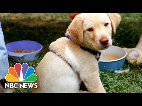 National Puppy Day Reminds Us Of The Benefits Of Dogs NBC News