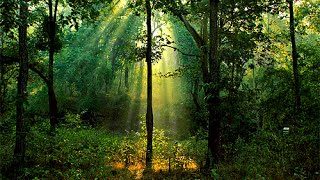 Realxing forest music for studing and mediatation