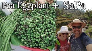 Growing Pea Eggplant Growing Corn Asian Vacation in SaPa Vietnam