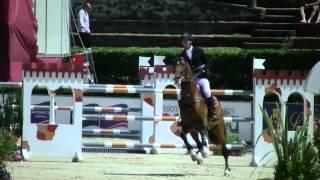 Zavall Rome 1.50m