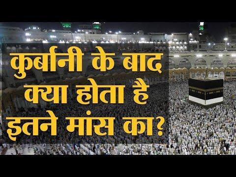 Haj में Qurban होने वाले इतने जानवर कहां से आते हैं और कहां चले जाते हैं Eid al Adha Bakrid
