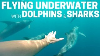 Subwing - Flying Underwater with Dolphins and Sharks