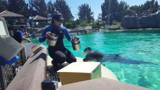 SeaWorld Trip 08/2016, (Up Close With Trainers & Dolphins)