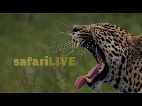 safariLIVE - Sunrise Safari - Feb. 21, 2017