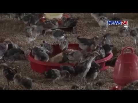 Jessore Farm (বেহাল দশা যশোরের সরকারি হাস-মুরগির খামার) On News24